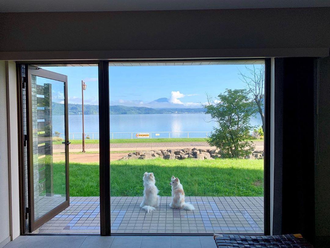 泊まれる 宿 と 北海道 犬