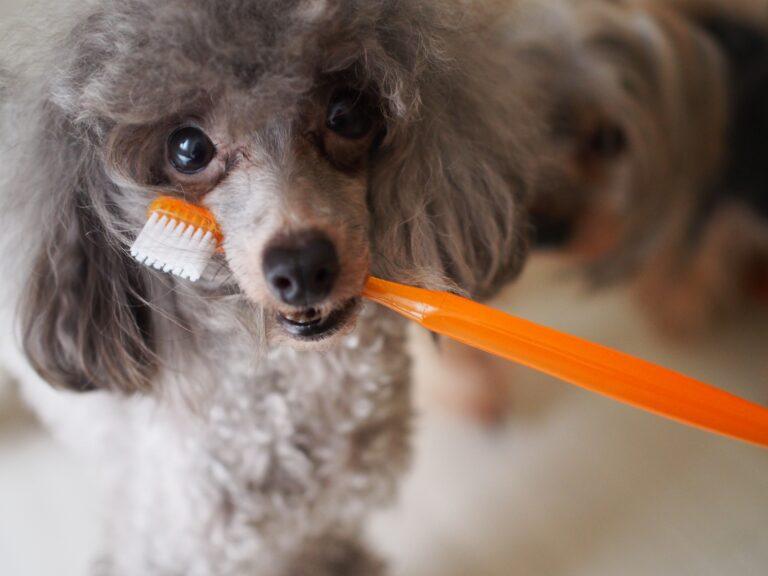 犬 歯磨きふりかけ おすすめ
